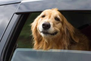Remove dog hair before selling your car